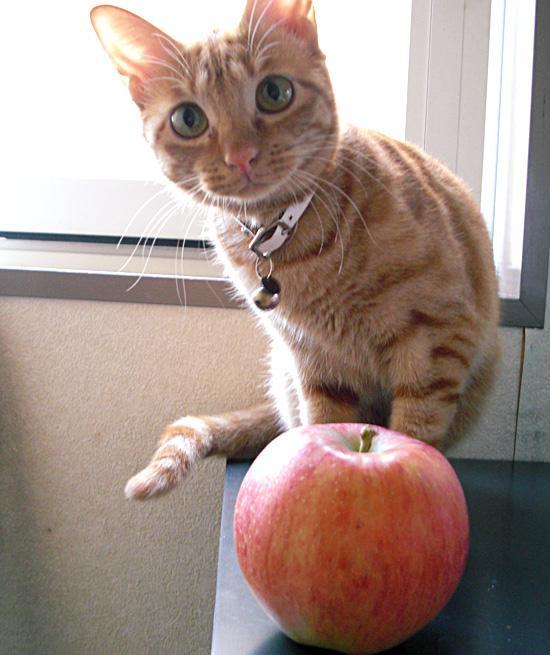 fruits-cat10.jpg