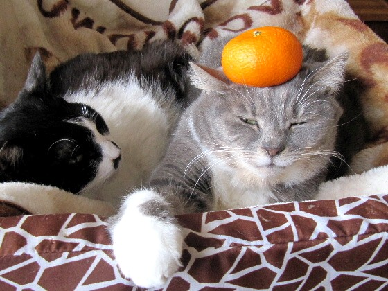 fruits-cat18.jpg