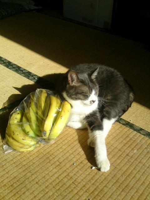 fruits-cat20.jpg