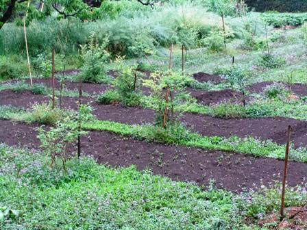 2011.5.10 ブルーベリー畑031