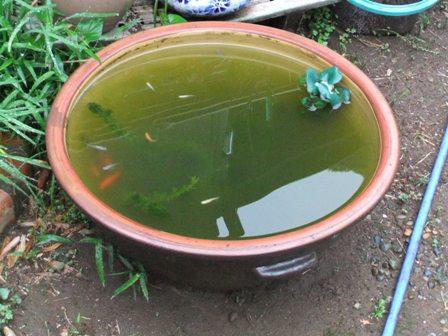 2011.5.10 金魚鉢 029