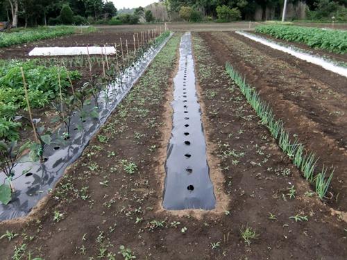 2011.5.31林農園 001 (2)