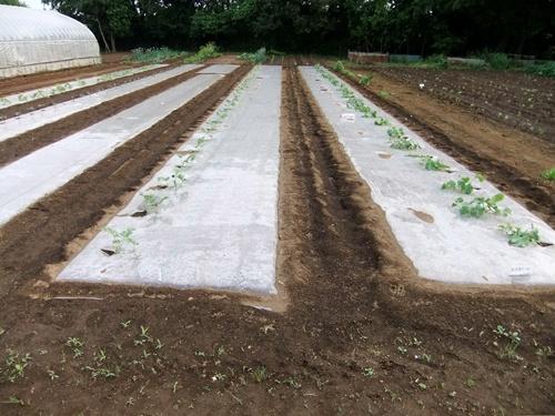 2011.5.31林農園 001 (4)