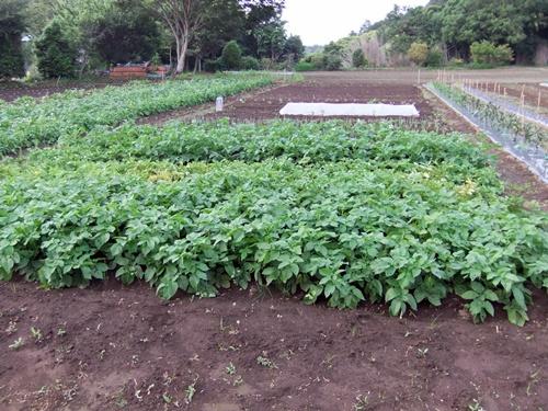 2011.5.31林農園 001 (1)