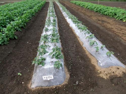2011.5.31林農園 001 (3)