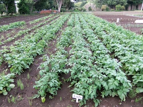 2011.5.31林農園 001