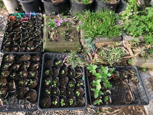 2011.5.31 花の苗 028