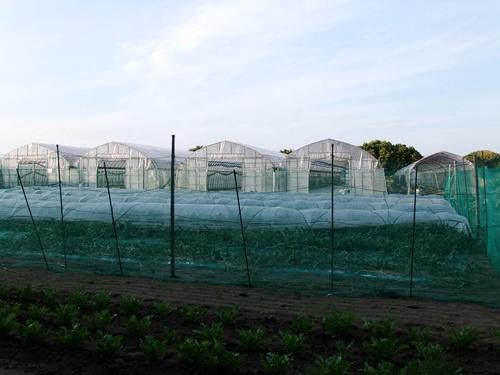 2011.6.22 稲村さんのメロン 003 (8)