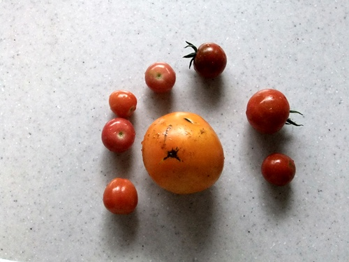 2011.6.24 トマト収穫 003