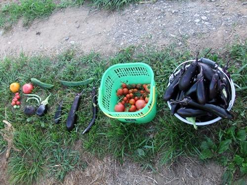 2011.7.10 収穫した野菜達 009