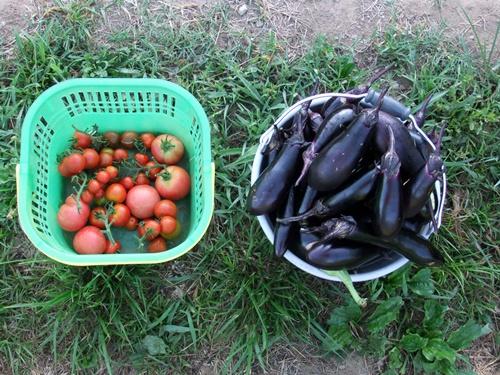 2011.7.10 野菜達 010