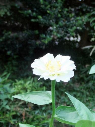 2011.8.14 庭に咲く花 011 (8)