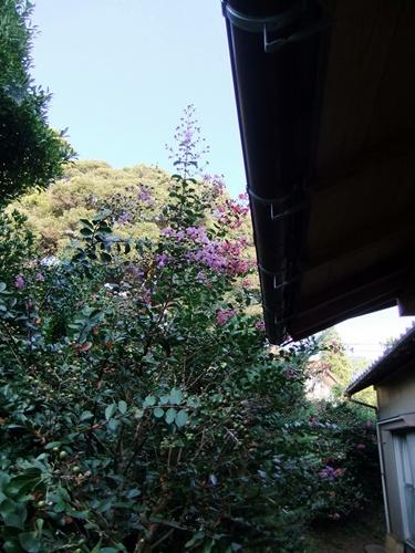 2011.8.14 庭に咲く花 011 (5)