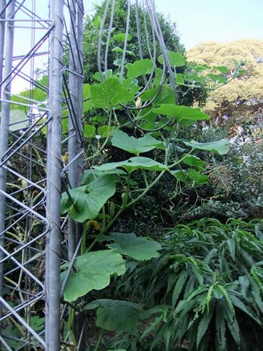 2011.8.14 庭に咲く花 011 (4)