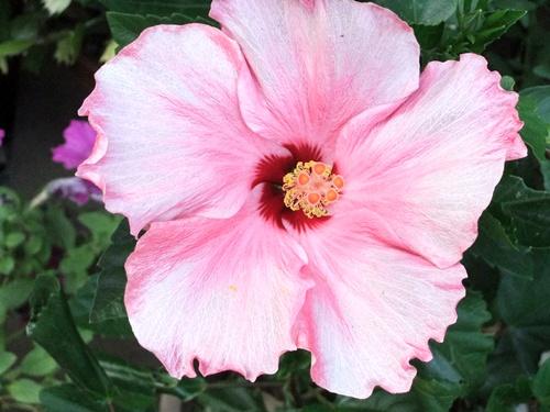 2011.8.14 庭に咲く花 011 (10)