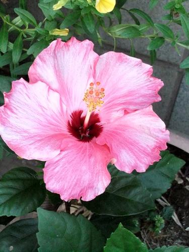 2011.8.14 庭に咲く花 011 (11)