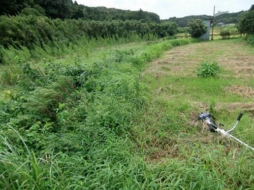 2011.9.4 畑の草刈 007 (4)