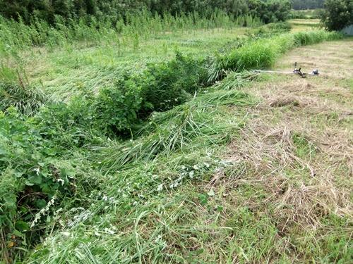 2011.9.4 畑の草刈 007 (2)