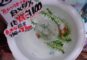 2010.12.1ブログ画像 (4)