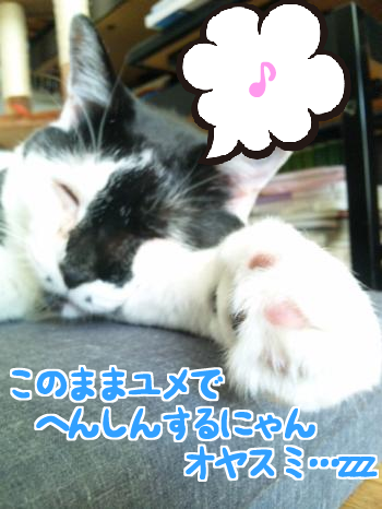 いい夢見ろよ!