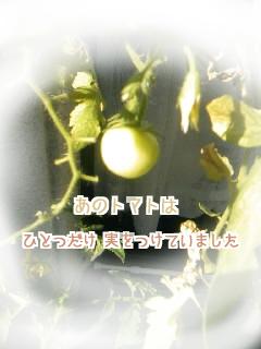 その後のトマト①