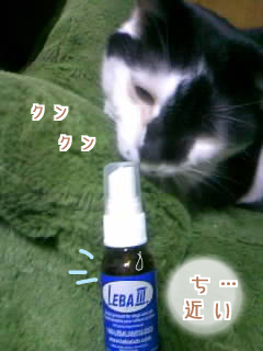 コ コイツ~