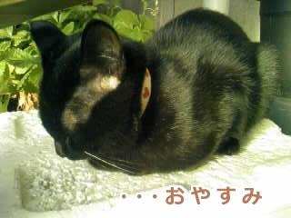 おやすみでちゅ~♪
