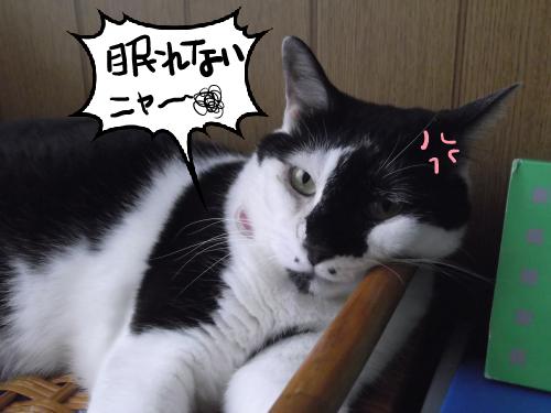 眠れないニャ~!!!!