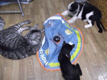 救世主☆に集まる猫サンたち