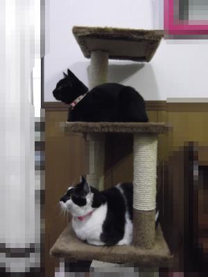 テレビを見る猫サン