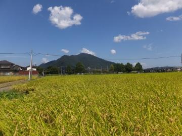 26年れんげ米稲刈り