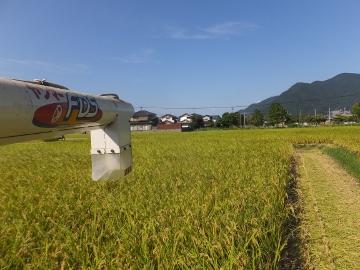 26年れんげ米稲刈り2