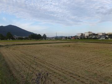 26年れんげ米稲刈り11