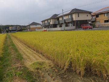 26年稲刈り終了5