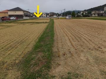 26年稲刈り終了8