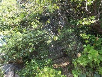 クモの巣3