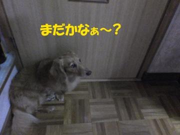 早く来て~3
