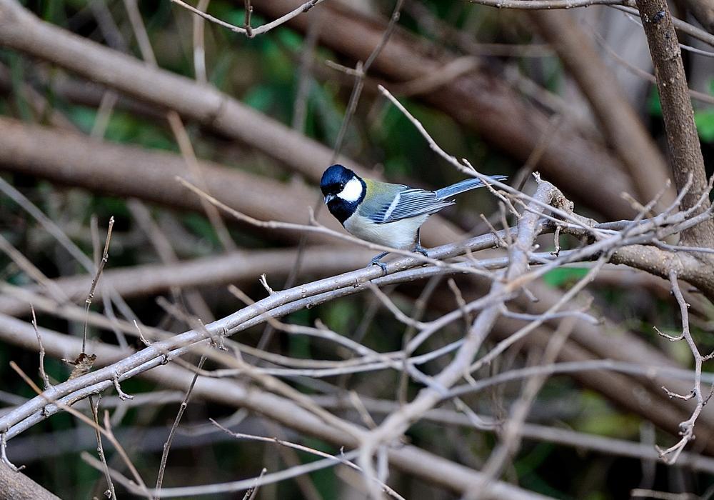 水飲み場に飛来した小鳥