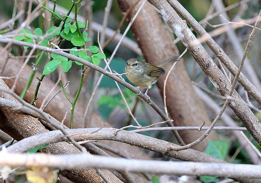 水飲み場付近に飛来した小鳥(その2)