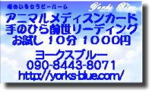 プチ癒しフェスタ公式ブログ-ヨークスブルー