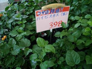 DSCN1361.jpg
