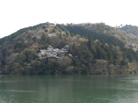 大谷池の桜 1