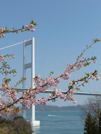 河津桜 (サンライズ糸山) 3