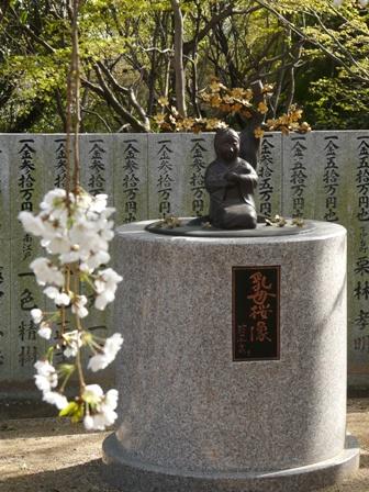 大宝寺 うば桜 8