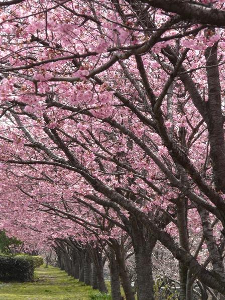 赤坂泉公園 1