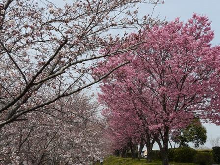 赤坂泉公園 4