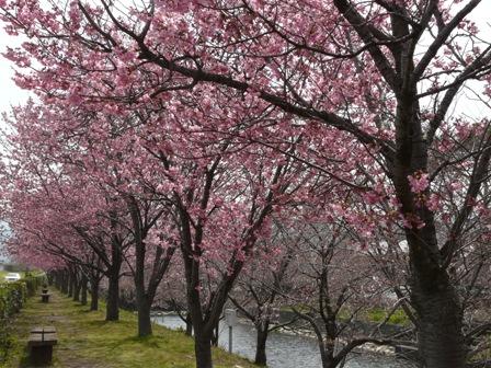 赤坂泉公園 6