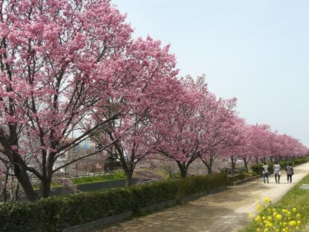 赤坂泉公園 9
