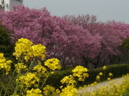 赤坂泉公園 8