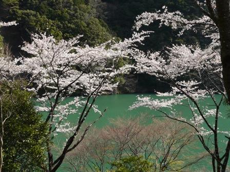 仁淀川町 桜風景 1
